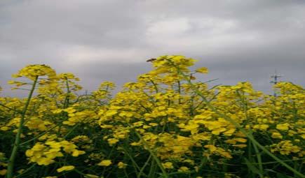 帶動生產需求結合 加快農機農藝融合推動經濟作物高質量發展